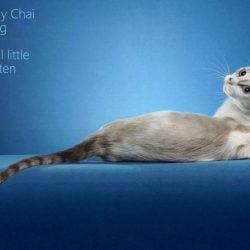 Rescue cat photo portrait