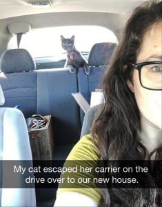 Backseat driver cat