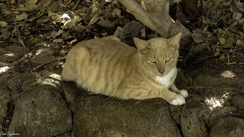 Feral cat pictures