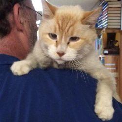 Casper the bookstore cat