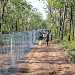 Is Australia's Feral Cat-Proof Fence Really Cat Proof?