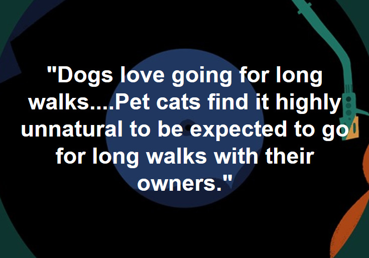Cats find it unnatural to go for walks with their owner