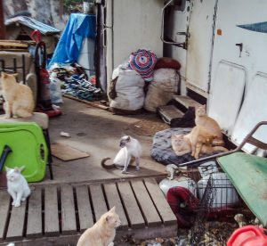 Colony of semi-ferals to be rescued