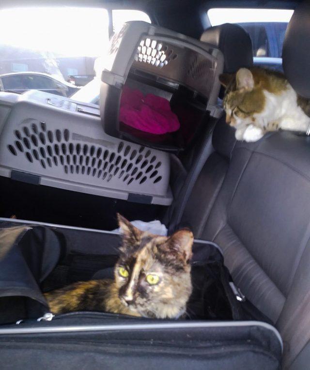 Cynthia Serna's Cats