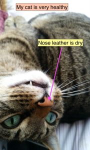 Should my cat have a wet nose?