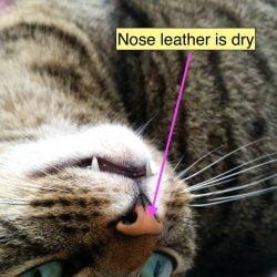 Should my cat have a wet nose?