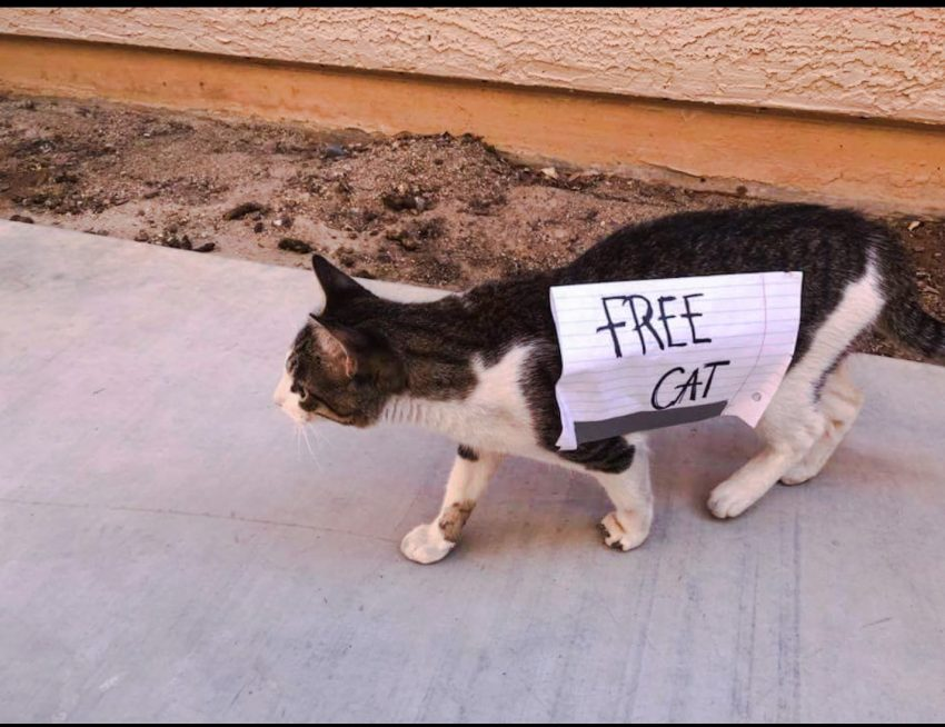 Free Cat Sign Was Duct Taped To A Cat