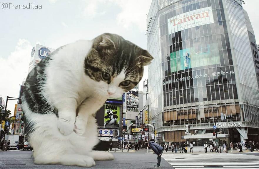 Giant Cats Catzilla Poc