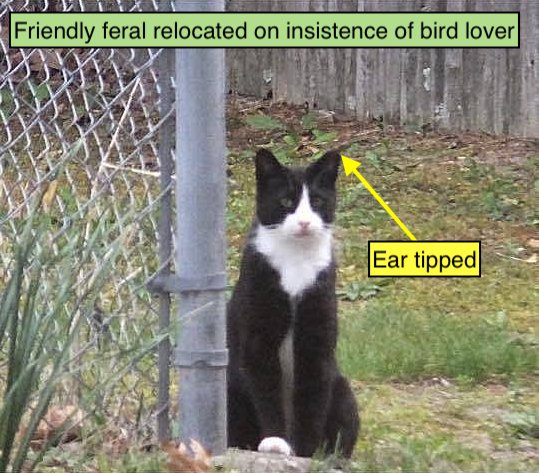 Friendy feral cat relocated on insistence of bird lover