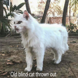 Old blind cat thrown out and now rehomed