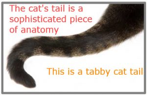What are cat tails made of?
