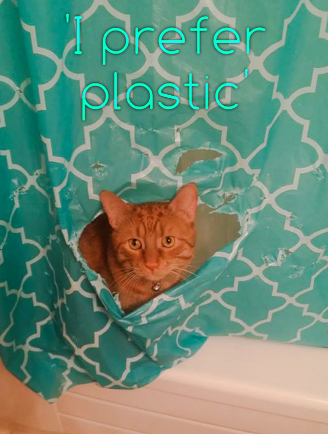 Picture of ginger cat looking through in shower curtain he made