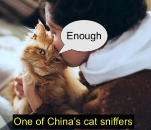 Cat sniffer in china