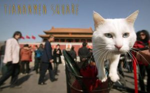 The green shoots of animal welfare legislation in China