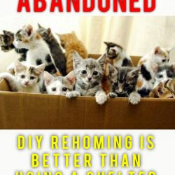 DIY rehoming is better than using a shelter