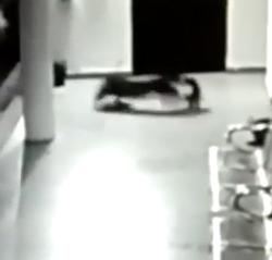 leopard attacks puppy