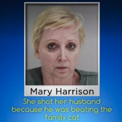 She shot her husband dead because he was beating the family cat