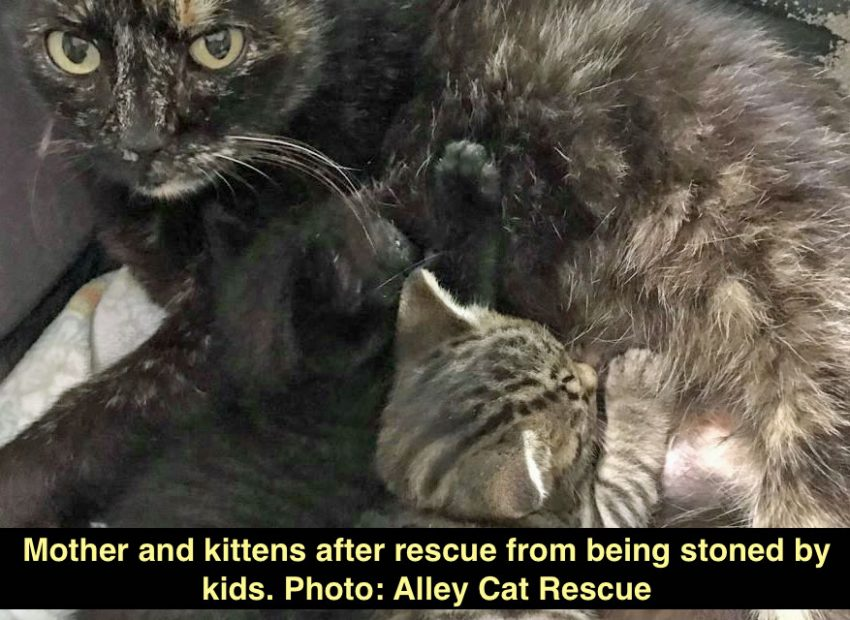 Kittens stoned by kids