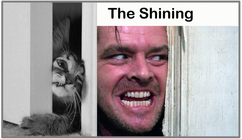 The Shining for cats