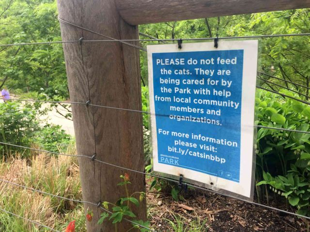 Trap-neuter-return volunteers insist only they can feed the cats
