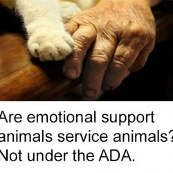 Are emotional support animal service animals?