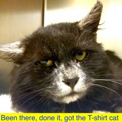 Picture of been there, done it, got the T-shirt cat