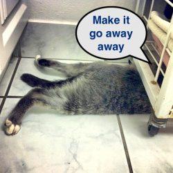 Cat at veterinarian's