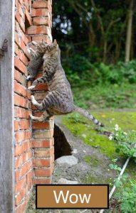 Cat moves kitten to new nest