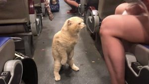 Airline cat travel got hostile