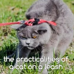 The Leash Laws of Springfield Illinois