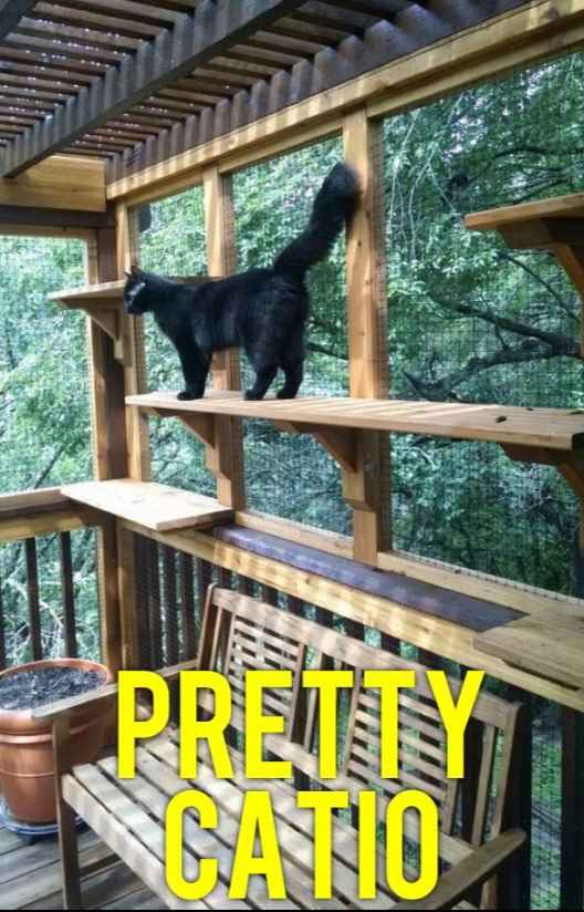 A catio improves a cat's personality