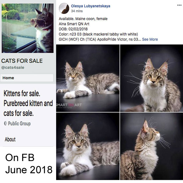 Rampant flouting of Facebook rules prohibiting the selling cats