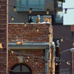 Cats in art installation in Denver backstreet