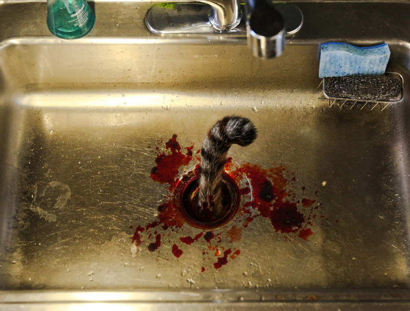 Picture of cat's tail sticking out of garbage disposal unit