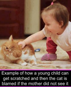 Picture: example of how child cat get scratched by a domestic cat