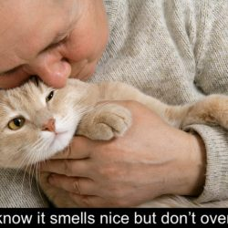 Chinese cat sniffer