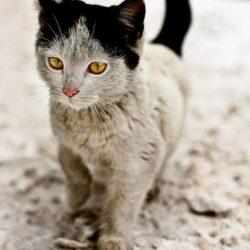 dirty cute cat