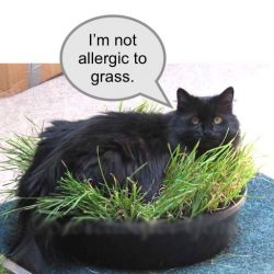 Domestic cats allergic to grass