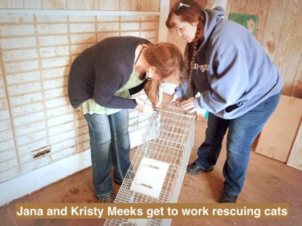 Jana and Kristy get to work rescuing cats