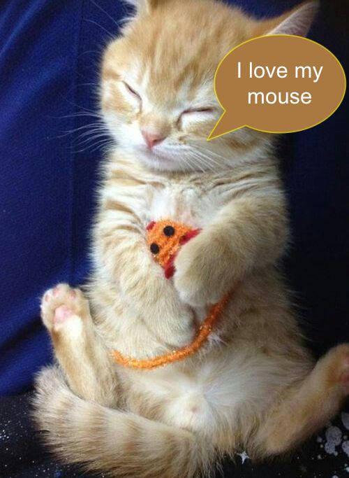 Kitten with mouse