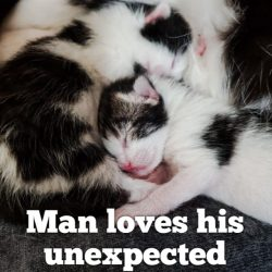 Man thrust into midwife postpartum care of a litter of kittens