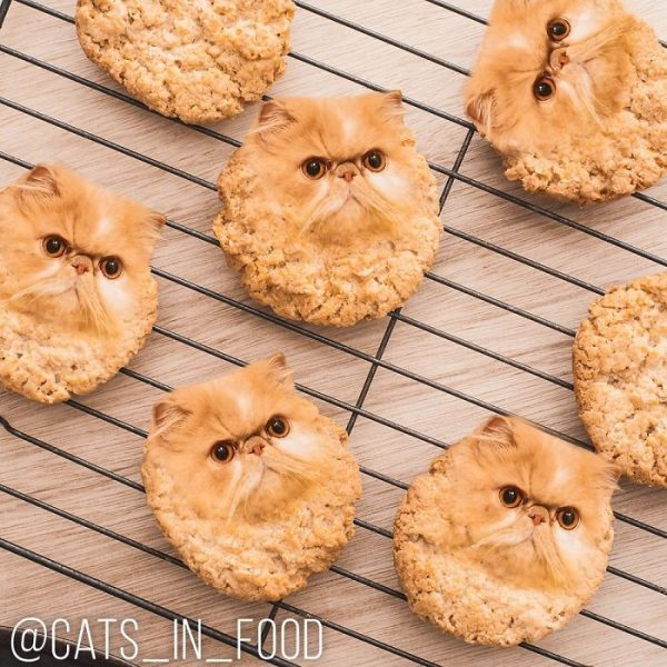 Photoshopping cats into food pictures. Photo: Ksenia