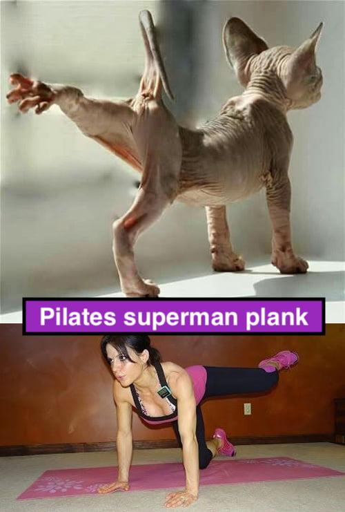 Pilates cat superman plank
