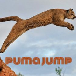 How far can pumas jump?