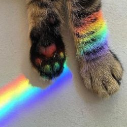 Spectrum and cat's paws