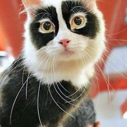 Photo of 'Spectacles Cat'