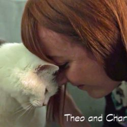 Cat saved life of owner by keeping her awake all night