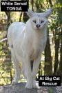 White serval Tonga