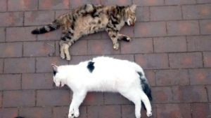 Two cats fell from tower block