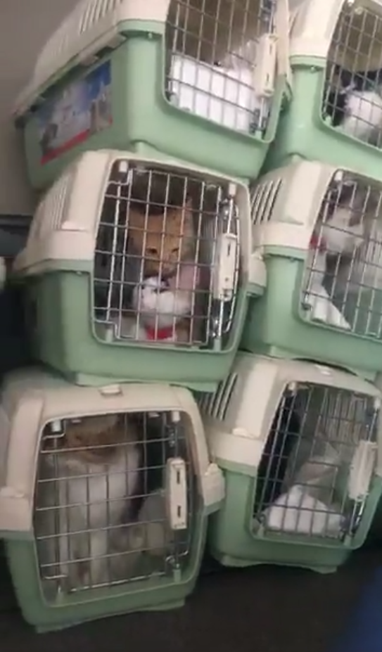 Cat rescue flight LA to Seattle